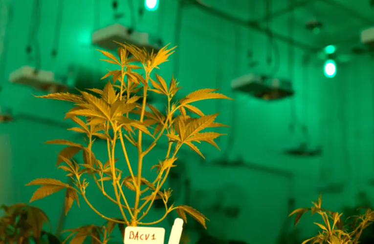 Texas' medical cannabis program could expand under bill OK'd by House